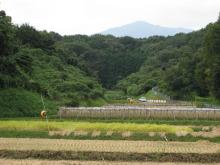 田んぼ 稲刈り