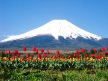 $クソみてえなウンコのアクセスアップと富士山