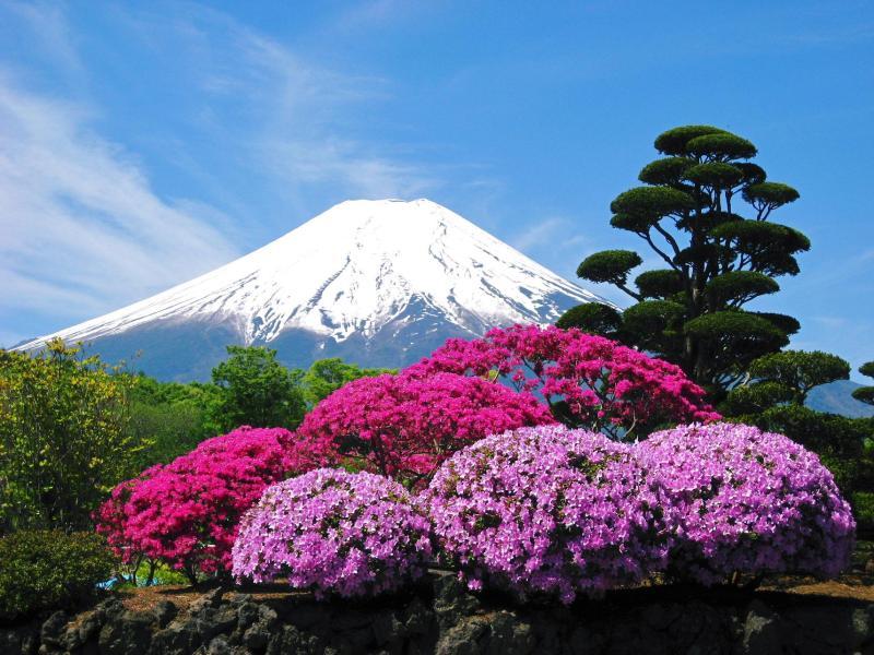 ●さつきと富士山