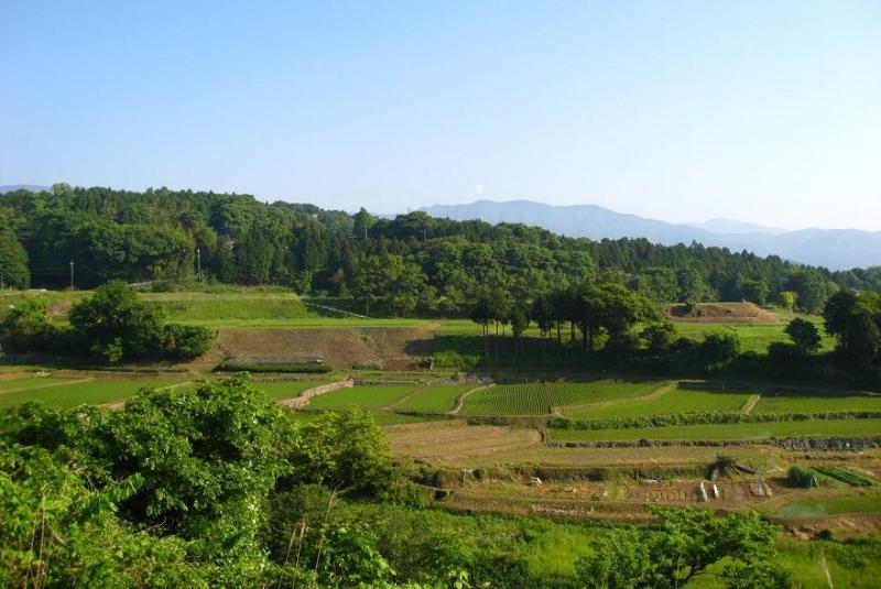 静岡県の小山町の苗の棚田