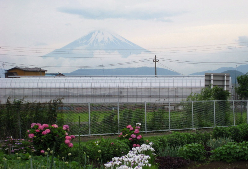 ⇒紫陽花と富士山