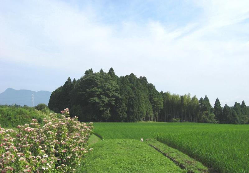 県道山中湖小山線沿いの棚田とガクアジサイ画像