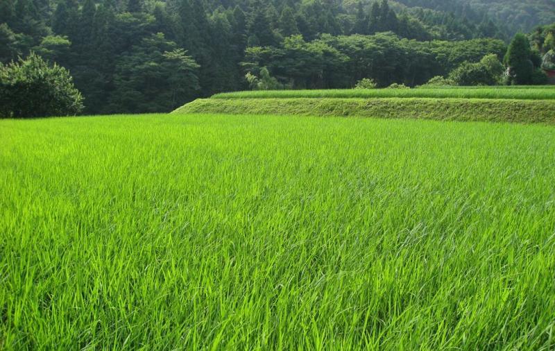県道山中湖小山線沿いの棚田画像