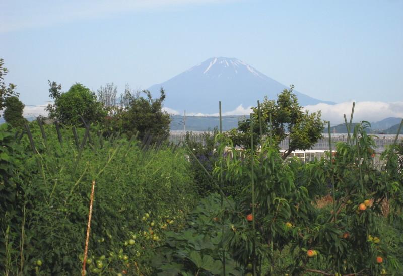 トマト富士山