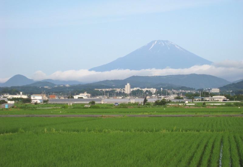 田んぼと富士山2010年7月