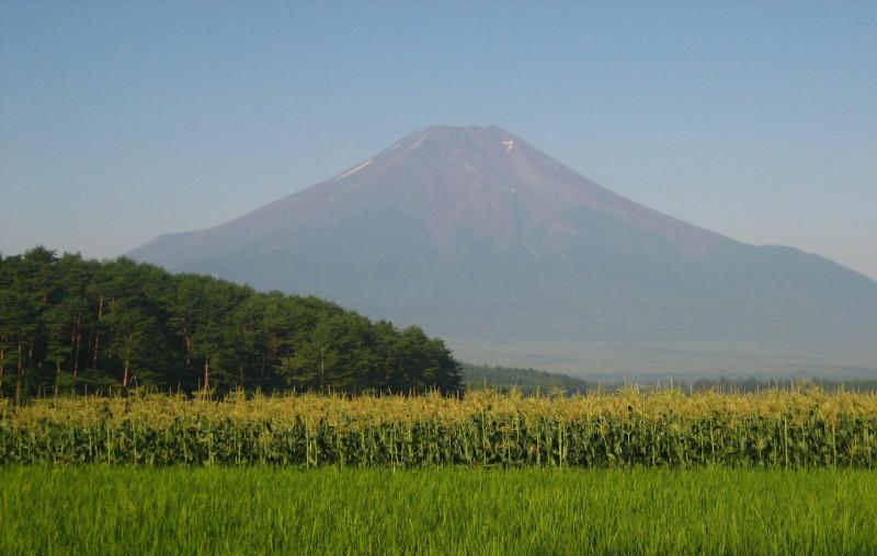 とうもろこし富士