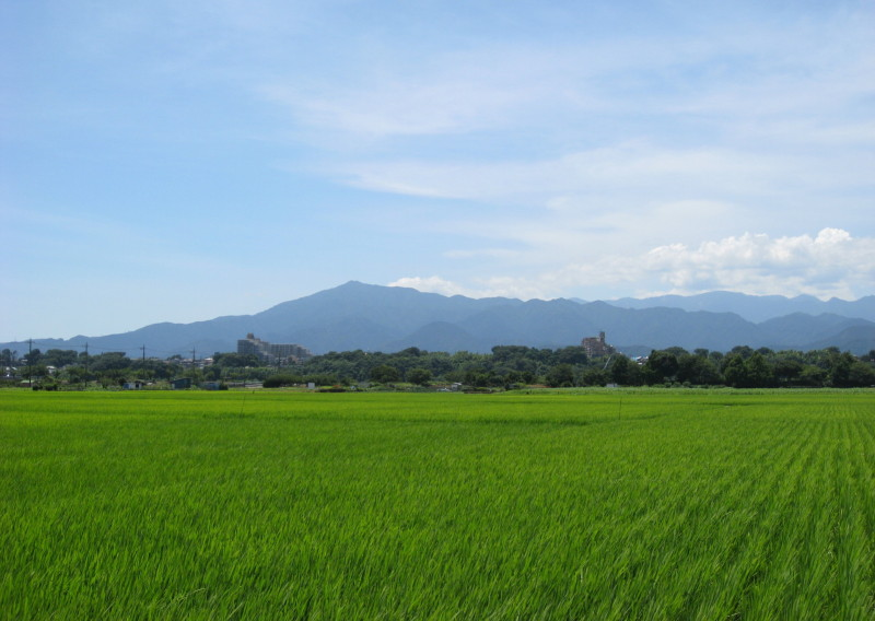 座間市で撮った田んぼ越しの大山