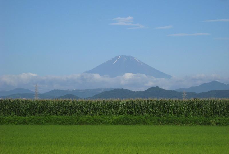 ⇒富士山とうもろこし畑