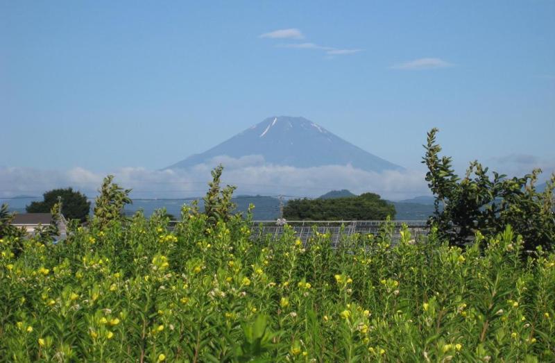 富士山と月見草