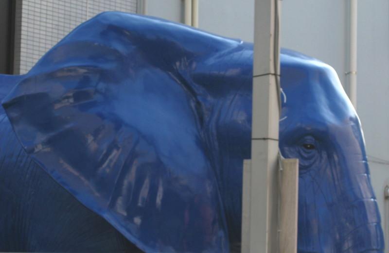 小田急相模原の象