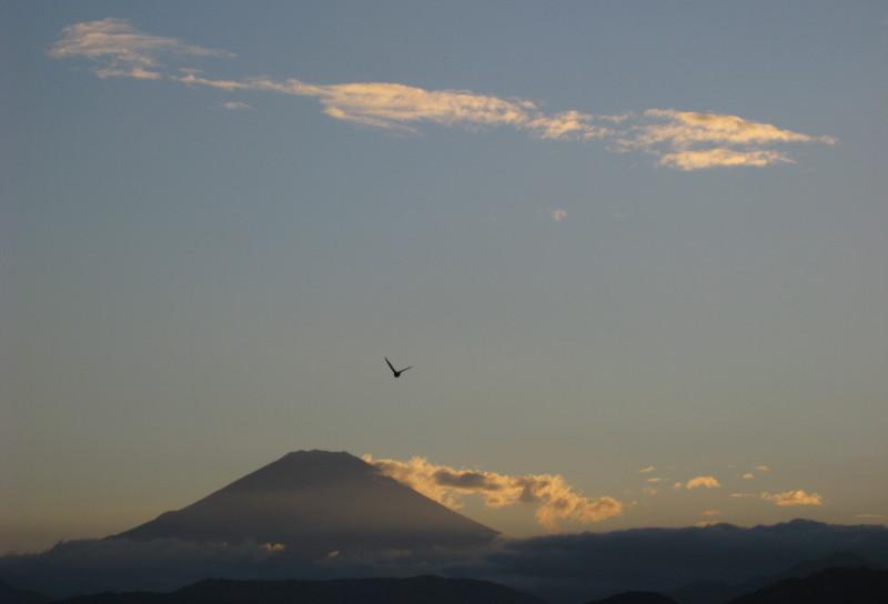 富士山&鳥