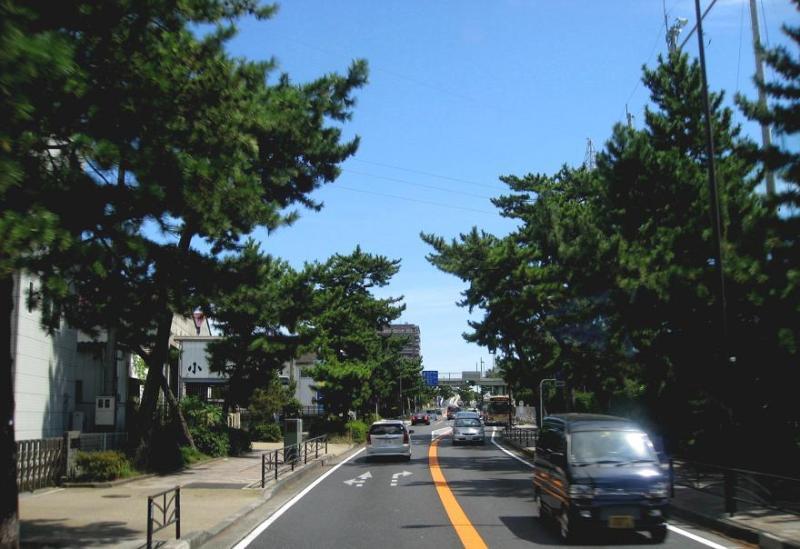 茅ヶ崎国道1号東海道松並木-3