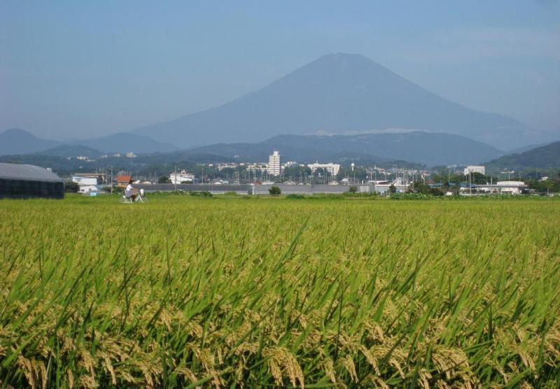 富士山 自転車女子高生 田んぼ