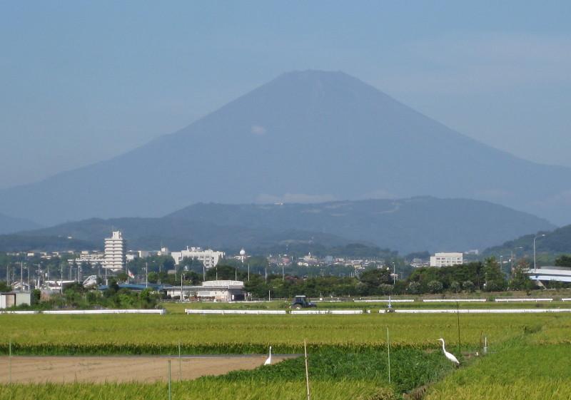 富士山 田んぼ 鳥