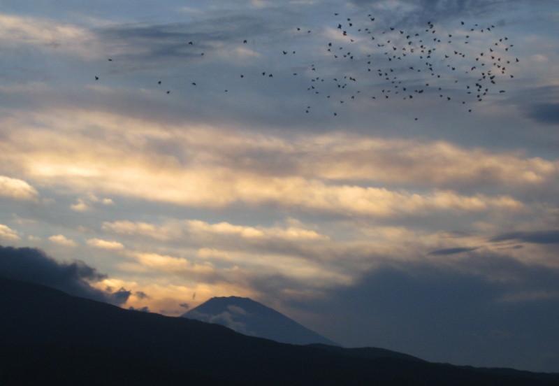 富士山 鳥