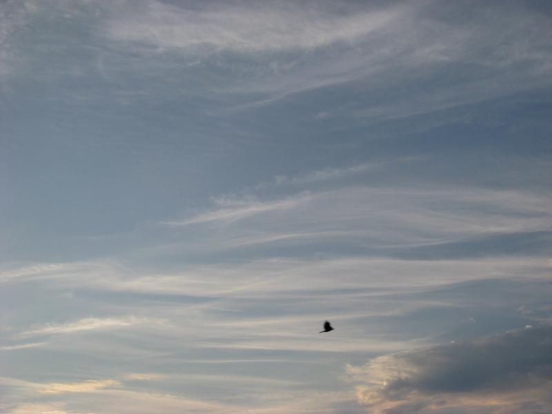 空 すじ雲