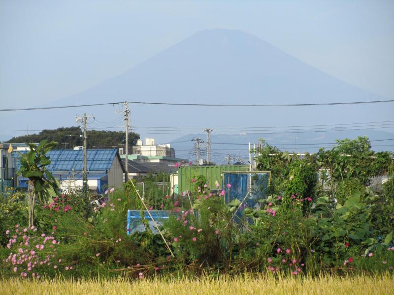 富士山 コスモス 秋桜