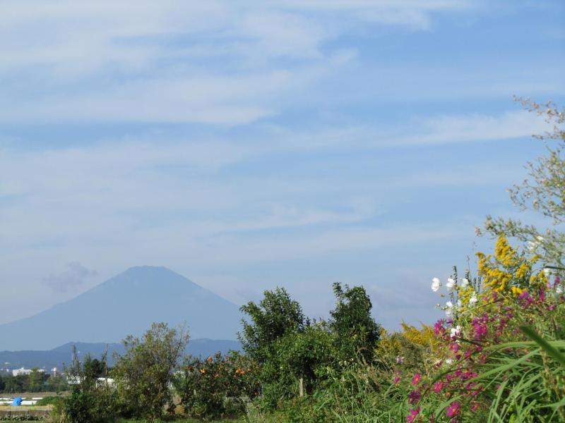 富士山とセイタカアワダチソウとコスモスと柿のと空の写真 画像