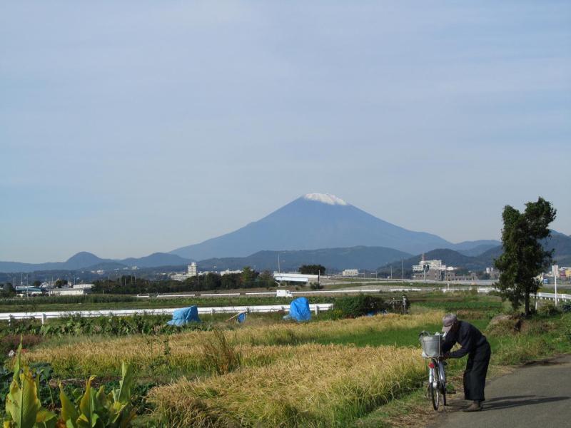 富士山と秋の田んぼ 神奈川