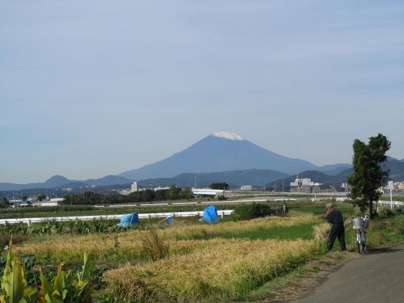 秋の田んぼと富士山 神奈川