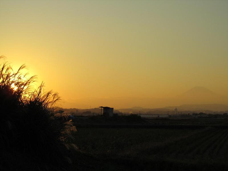 夕日ススキ富士山