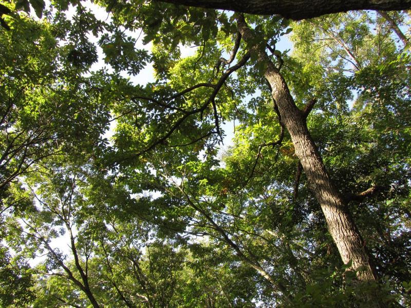 秦野市弘法山公園 森林写真