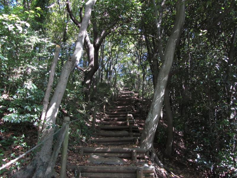 秦野市弘法山公園 階段