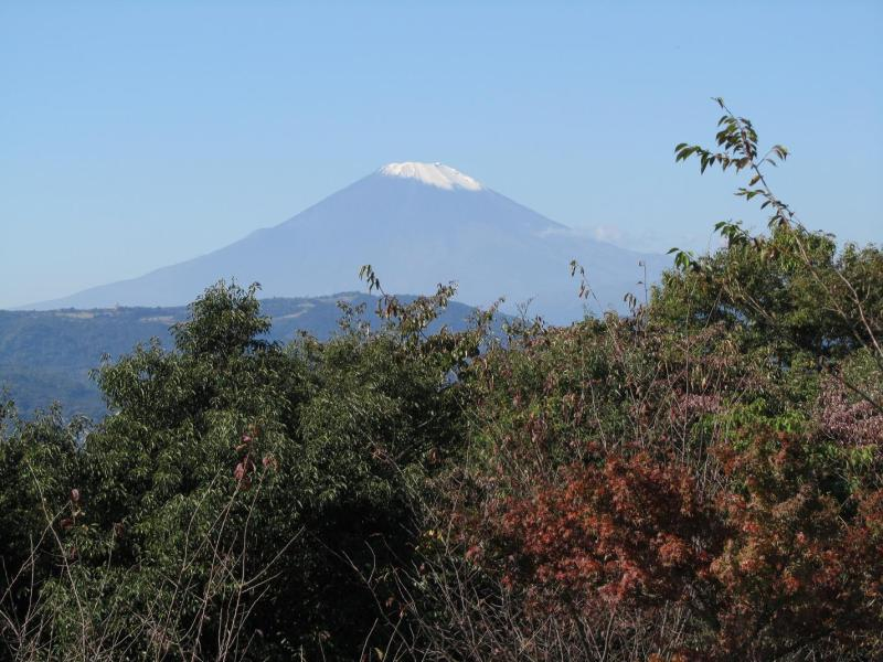 富士山 秦野市弘法山公園 紅葉
