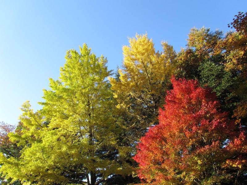 富士吉田の紅葉(新倉浅間公園・2010年11月6日)