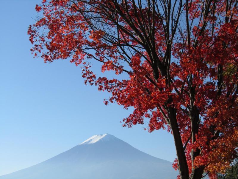 富士山 紅葉もみじ 河口湖