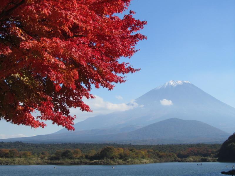 富士山 精進湖 紅葉もみじ