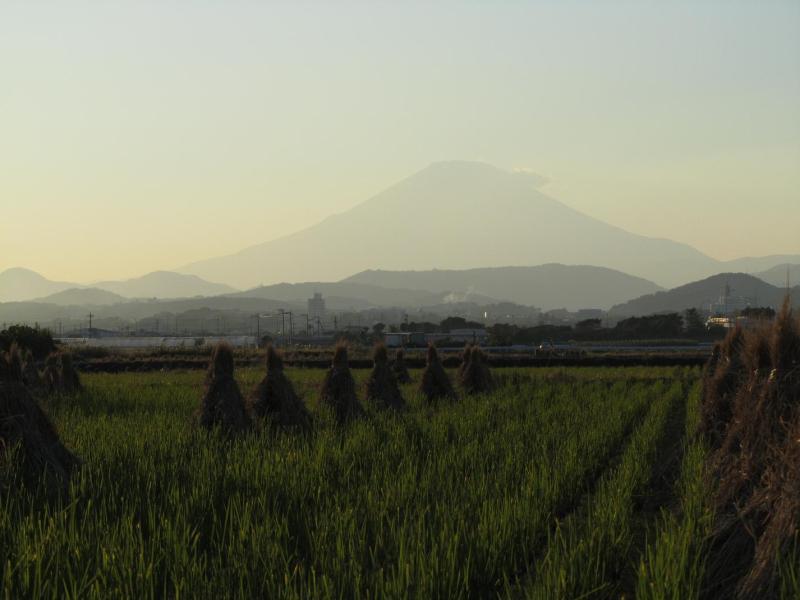 富士山 田んぼ 秋