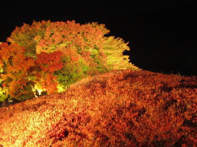 河口湖 紅葉ライトアップ