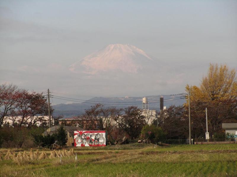 富士山 イチョウ