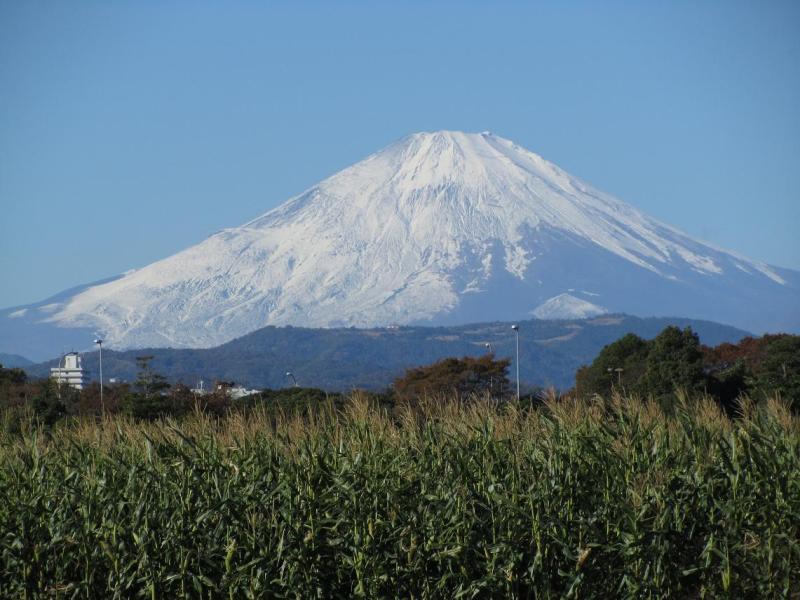 富士山 とうもろこし