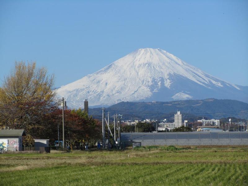 富士山 銀杏