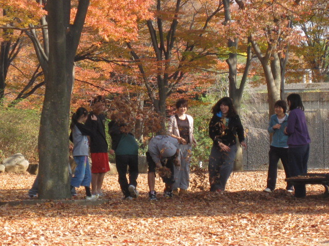 神奈川県茅ヶ崎中央公園の紅葉