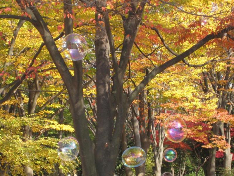 シャボン玉と神奈川県茅ヶ崎中央公園の紅葉