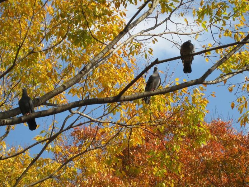 鳥と神奈川県茅ヶ崎中央公園の紅葉