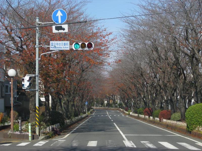 桜のトンネル 紅葉並木道