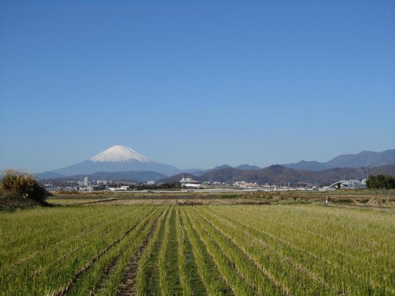 富士山 田んぼ
