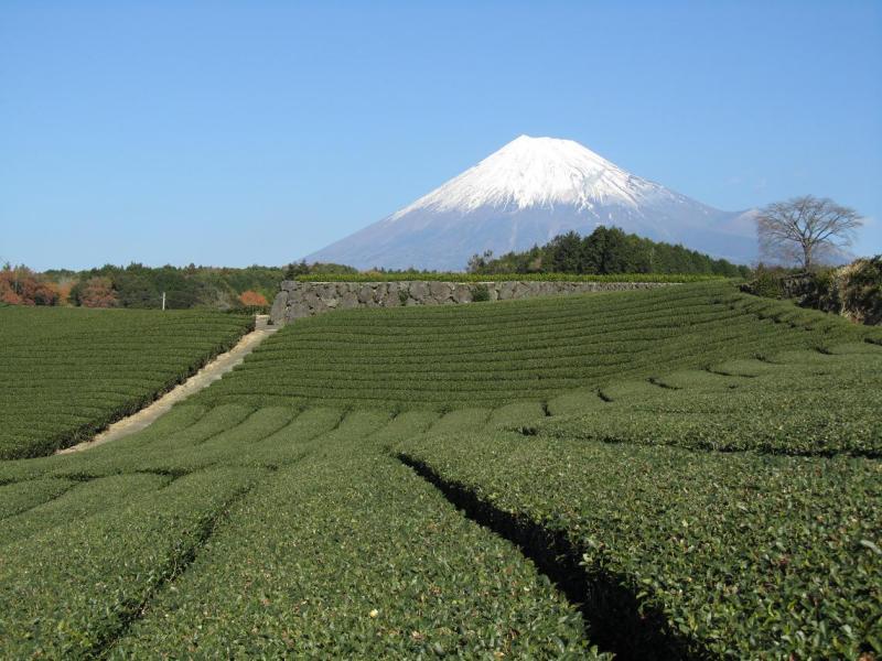 富士山画像 今宮茶畑