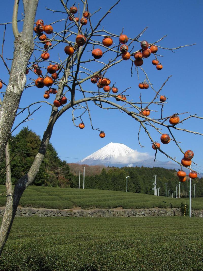 富士山 柿 茶畑 大渕