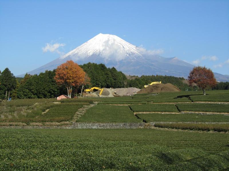 富士山画像 大渕 茶畑崩壊
