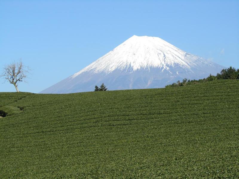 富士山画像 茶畑 今宮