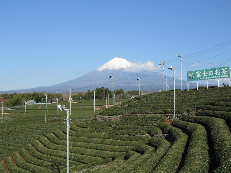 富士山 茶畑画像
