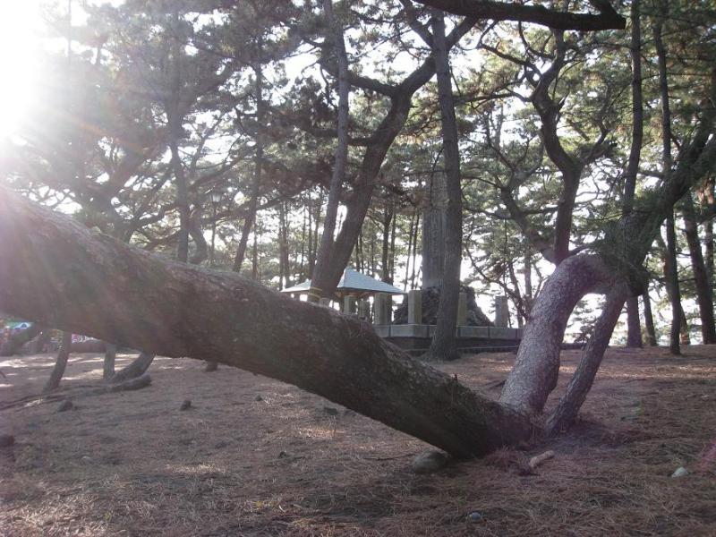 清水三保松原
