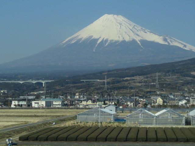 富士山 茶畑