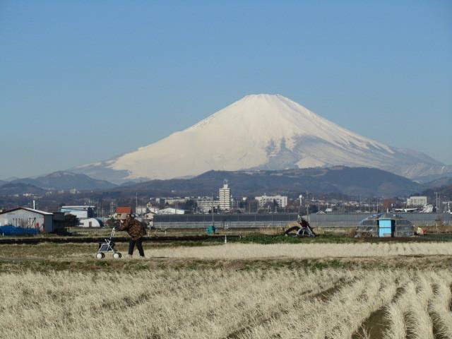 富士山 神奈川