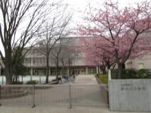 河津桜 夢の丘小学校